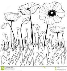 Poppy Flowers Page Noire Et Blanche De Livre De Coloriage