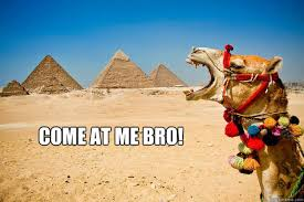 Camel Memes - 25 very funny camel pictures
