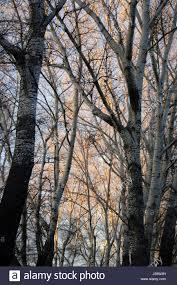 lighted tree branches lighted tree branches stock photos lighted tree branches stock