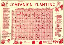 herb growing chart companion planting chart folded in a4 envelope all rare herbs