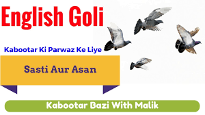 Ki by Kabootar Ki Parwaz Ki Medicine Kabootar Udane Ki English Goli By