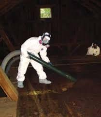 banishing bats bat deterrent u0026 removal old house restoration