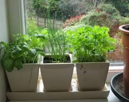 kitchen herb garden ideas kitchen how to grow indoor herb garden ideas amazing kitchen