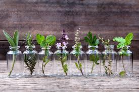 25 herbs vegetables u0026 plants you can grow in water