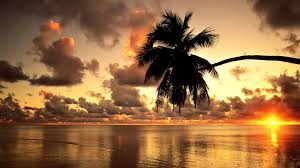 Palm Tree Wallpaper Ocean Sunset With Palm Trees Wallpaper