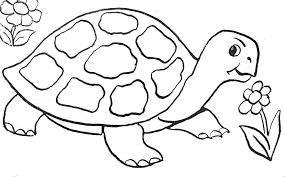 coloriage tortue les beaux dessins de animaux à imprimer et colorier