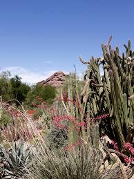 Arizona vegetaion images Free images landscape nature rock cactus hill desert