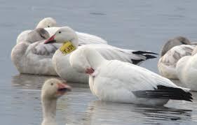 Nj Backyard Birds by 2014 December Birdquiz Net