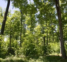 Pennsylvania forest images Pennsylvania sustainable forestry initiative jpg