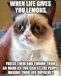 Rofl Meme - grumpy cat meme for more funny humor and humor memes visit www