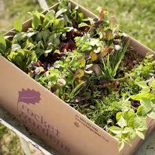 Gifts For Vegetable Gardeners by Large Vegetable Garden Gift Voucher Rocket Gardens