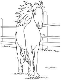 horse pictures kids black white color funny hd