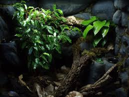 how to build a crested gecko vivarium gecko vivarium vivarium