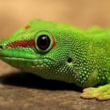 pit lizard on twitter