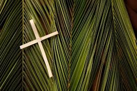 palm branches for palm sunday christians commemorate palm sunday with processions naija news
