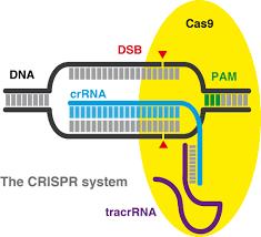 the crispr web page
