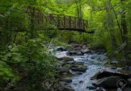 Minnesota forest images Bridges in lush green forest over a small creek in northern jpg