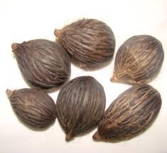 polynesian produce stand 10 foxtail palm tree wodyetia bifurcata