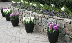 Potted Plants For Patio Stylish Patio Pot Plants Ideas Garden Decors