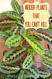 indoor plants that you just can u0027t kill whats ur home story