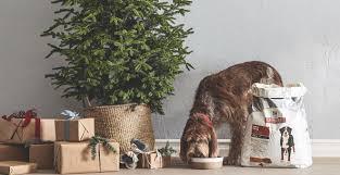 black friday cat tree deals amazon amazon com pet supplies
