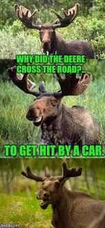 Moose Meme - bad pun moose its that time of year folks deer season imgflip