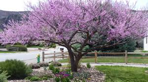 native texas landscaping plants lavender and so much more water wise gardening in the rocky