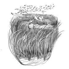 scenes and sketches america u0027s women naturalists u2013 the hairpin