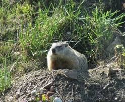9 illinois critters that could be lurking in your backyard huffpost