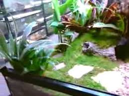 snake tank u0027 living terrarium by xavier truesdell youtube