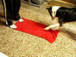Wipe Your Paws Dog Doormat How To U0027 Train Your Dog To Wipe His Dirty Paws Youtube