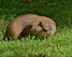 a year ago groundhog park mont royal muuuh
