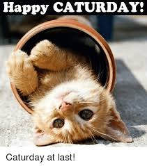 Caturday Meme - happy caturday caturday at last caturday meme on sizzle