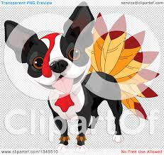 thanksgiving dog clipart of a thanksgiving boston terrier dog dressed as a turkey