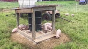 pasture pig feeder round one youtube