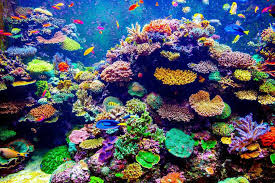 thanksgiving reefs 4 reasons why we should care about our coral reefs