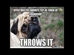 Funny Pug Memes - funny cute dog memes 4 pug memes pugs galore youtube