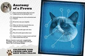 Unhappy Cat Meme - grumpy cat a grumpy book grumpy cat 9781452126579 com