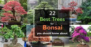 22 best trees for bonsai best bonsai plants balcony garden web