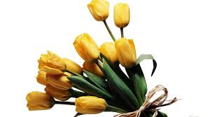 wallpapers tagged with flowers page 338 special flowers romance