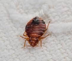 Bed Bugs New York City Bed Bugs Joe Blue Pest Control New York Ny Queens Brooklyn Bronx
