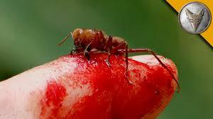 flesh ripping ants youtube