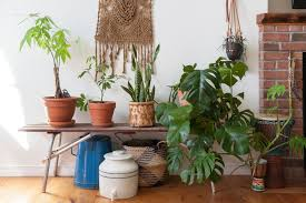 plant and keep an indoor lemon tree apartment therapy