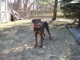 vince rambala dog training