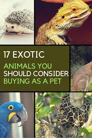 exotic animals 17 exotic animals you can legally own as pets