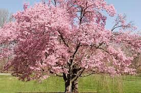 flowering trees tree growing birds blooms