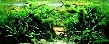 Nature Aquascape Top 10 Most Beautiful Freshwater Aquariums Of 2012 U2014 Hungarian