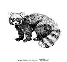 sketch panda stock images royalty free images u0026 vectors