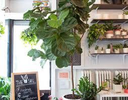 Low Light House Plant Plant Best Indoor Plants Low Light Momentous Best Indoor