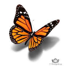 5 beautiful monarch butterfly designs